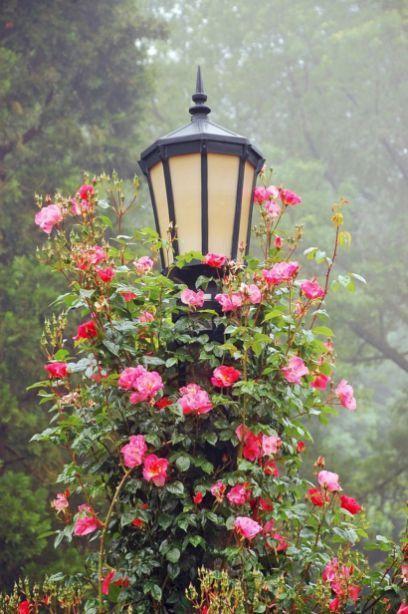 Secret Garden: Best Secret Gardens Ideas 10 #gardenvinesideas
