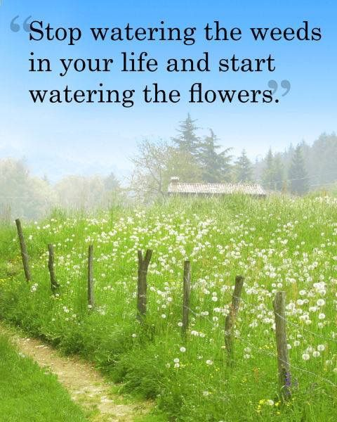 Inspirational Spring Quotes And Sayings: Pin By Priscilla Sawyer On Quotes & Inspiration