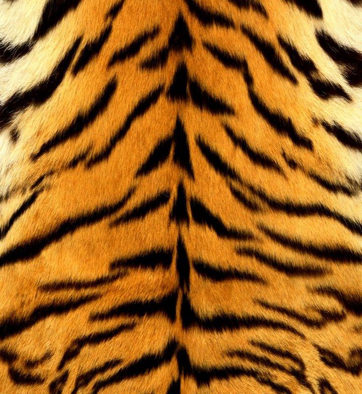 Tiger skin texture | You Animal! | Tiger fur, Tiger skin ... - photo#14