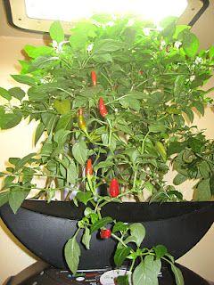 My Aerogarden And Houseplant Blog Aerogarden Indoor 400 x 300