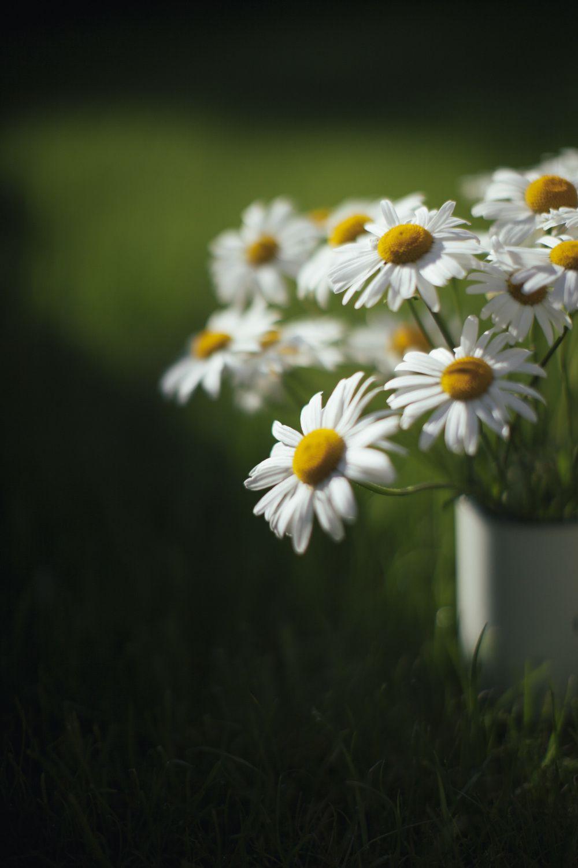 Olya Grigorova Photography Flowers Foliage Fungi And Flora