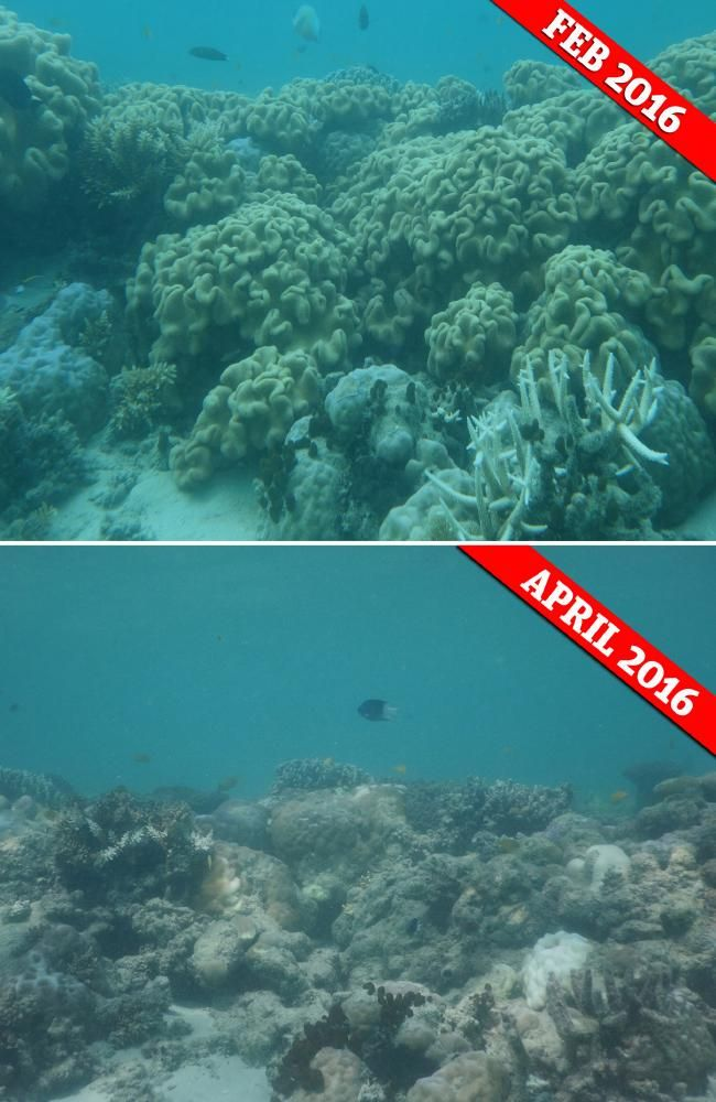 Great Barrier Reef Before And After Photos Shot By Professor