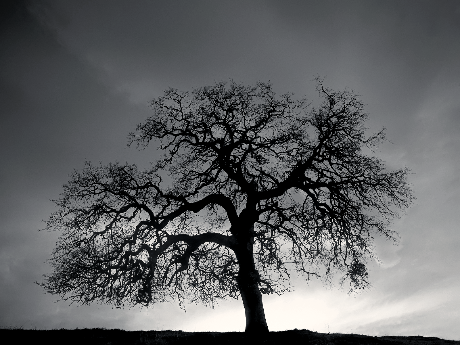 Black And White Tree Hill Wallpaper Black And White Tree White Tree Black And White Background