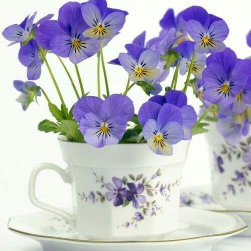 Amor Perfeito Teacup Flowers Pansies Beautiful Flowers
