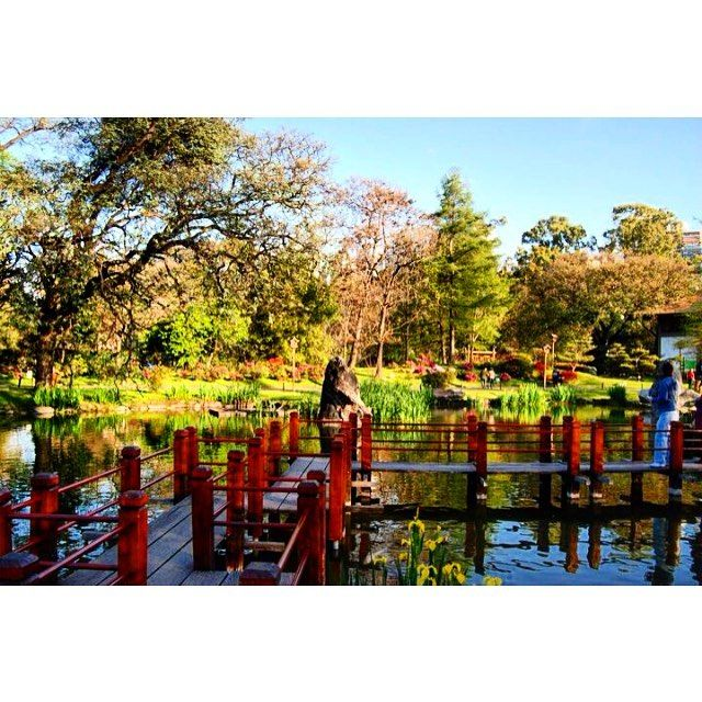 Paraíso #LiveTheLandscape. #JardínJapones #Palermo #BuenosAires #BsAs #CapitalFederal #Argentina #Sudamerica #SouthAmerica #Plantas #Plants #Arboles #Trees #InstaTrees #Jardín #Garden #InstaGarden #Lago #Lake #Puentes #Bridges #Parque #Park #Naturaleza #Nature #Paisaje #Landscape #InstaLandscape #Nikon by eduardocastro