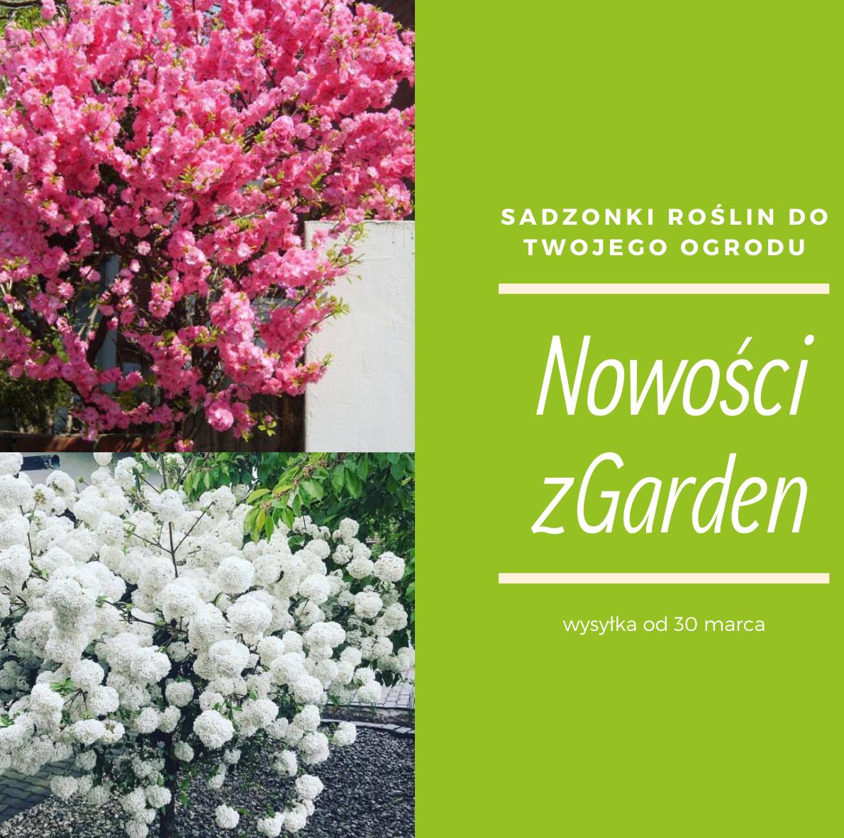 Wiosna Juz Niedlugo W Twoim Domu Sadzonki Roslin Dla Ciebie I Ogrodu Plants