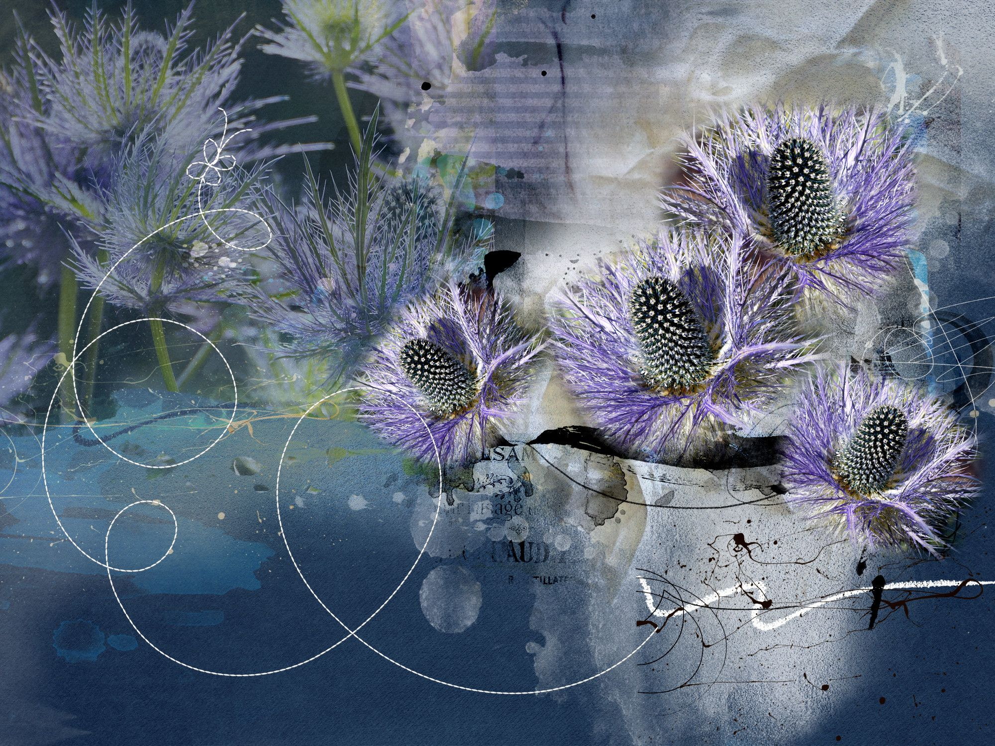 Thistles Digital Design By Anthea Day Simply Design Art Simply