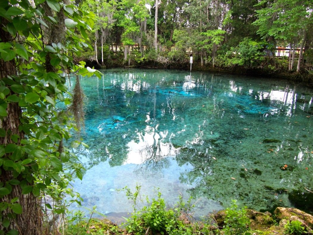 Travel Guide Unique Things To Do In Crystal River Florida - Florida rivers