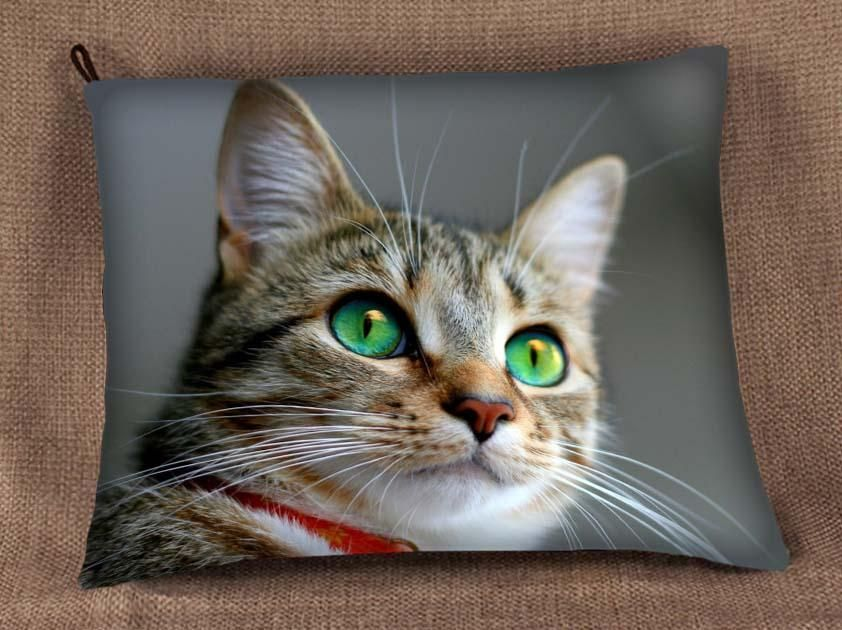 Poduszka Jasiek Kicia Kota Kot Super Wzory Jakosc 3717269885 Oficjalne Archiwum Allegro American Wirehair Cat Breeds Cats