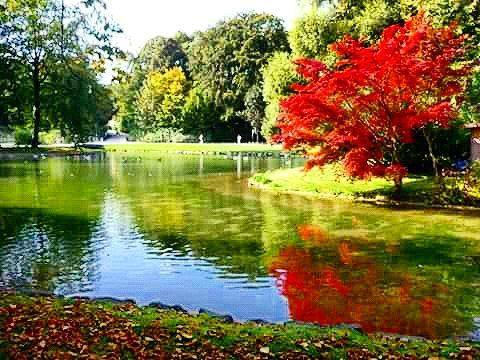 Englisch Garten Munich. #outdoors #park #nature #englischgarten  #englishgarden #muenchen