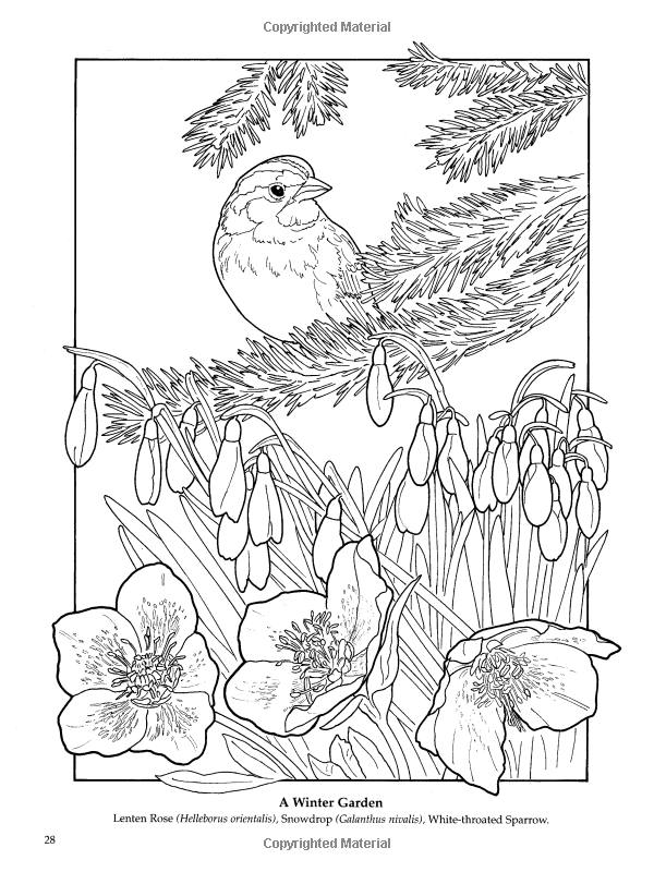 the flower garden coloring book ruth soffer