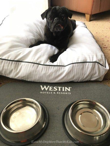 Dog Friendly Westin Harbour Castle Hotel Toronto Dog Friends Dog Friendly Hotels Road Trip With Dog