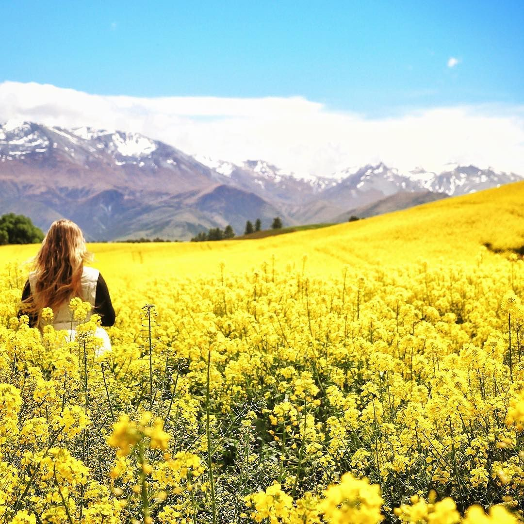 Fields of gold  by youngadventuress
