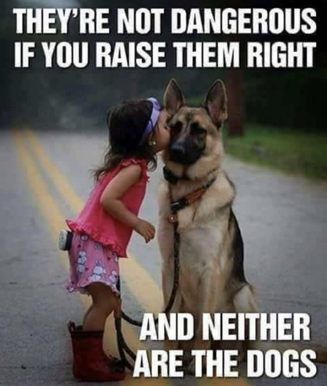 Pin by My4tress on Parenthood German shepherd dogs