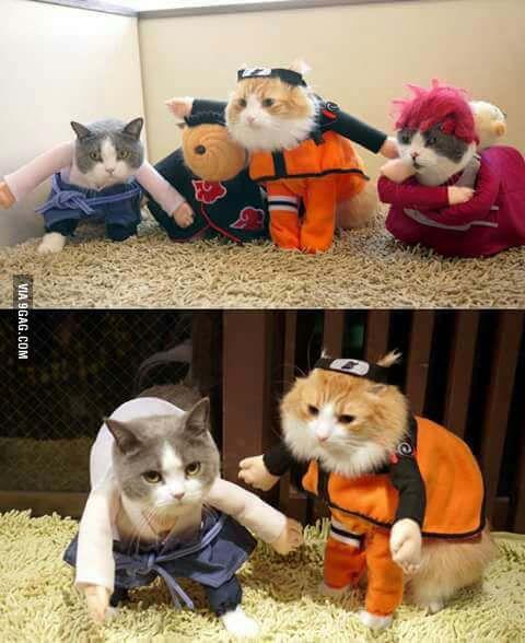 Naruto Catppuden. Catnobi Jitsu.   Funny naruto memes ...