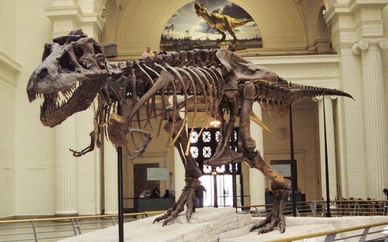 a32fa5129687937c6d72b3fab6724037 - How Do I Get To The Museum Of Natural History