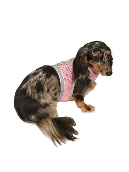 Athletic Vest Harness - check out the precious little long-haired dapple!!