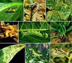 Plant Pest Identification Aid