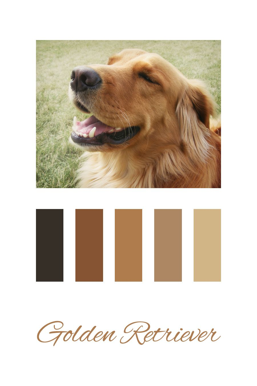 Color Palette Inspired By Our Golden Retriever Imthinkingoutloud