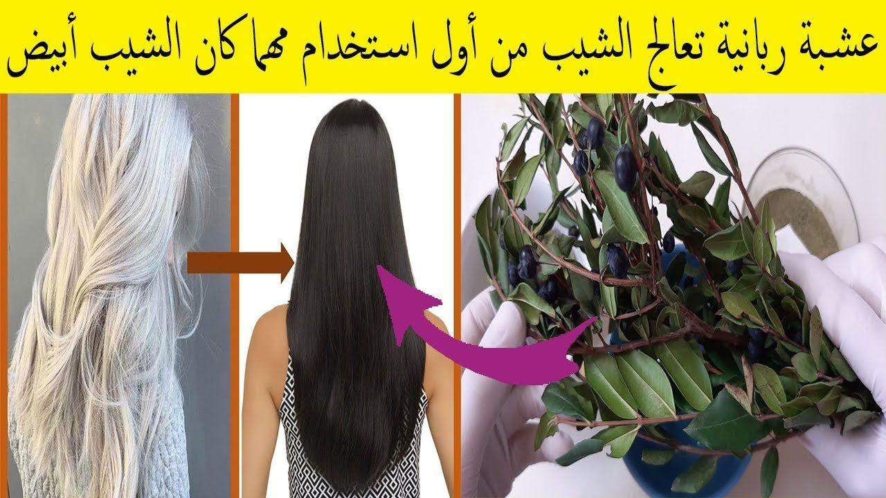 الآس عشبة ربانية بامتياز تقضي على الشيب نهائيا مهما كان الشعر ابيض وم Hair Control Body Skin Care Body Skin
