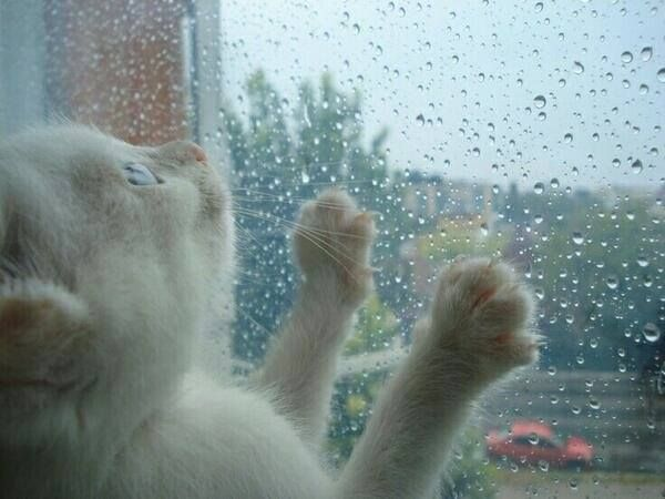 #cat #rain