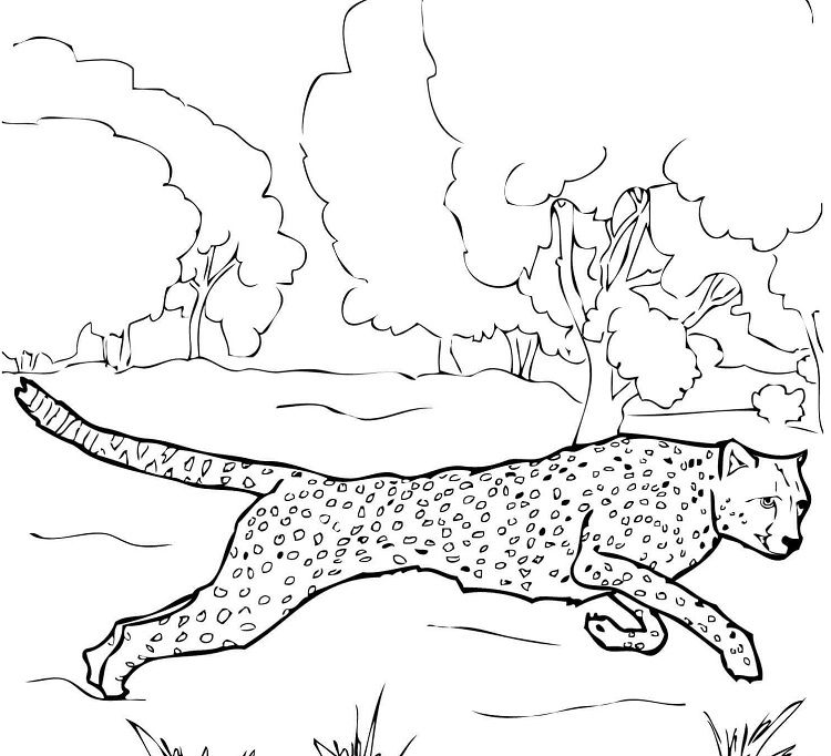 Running Cheetah Coloring Pages Ausmalen Ausmalbilder Gepard