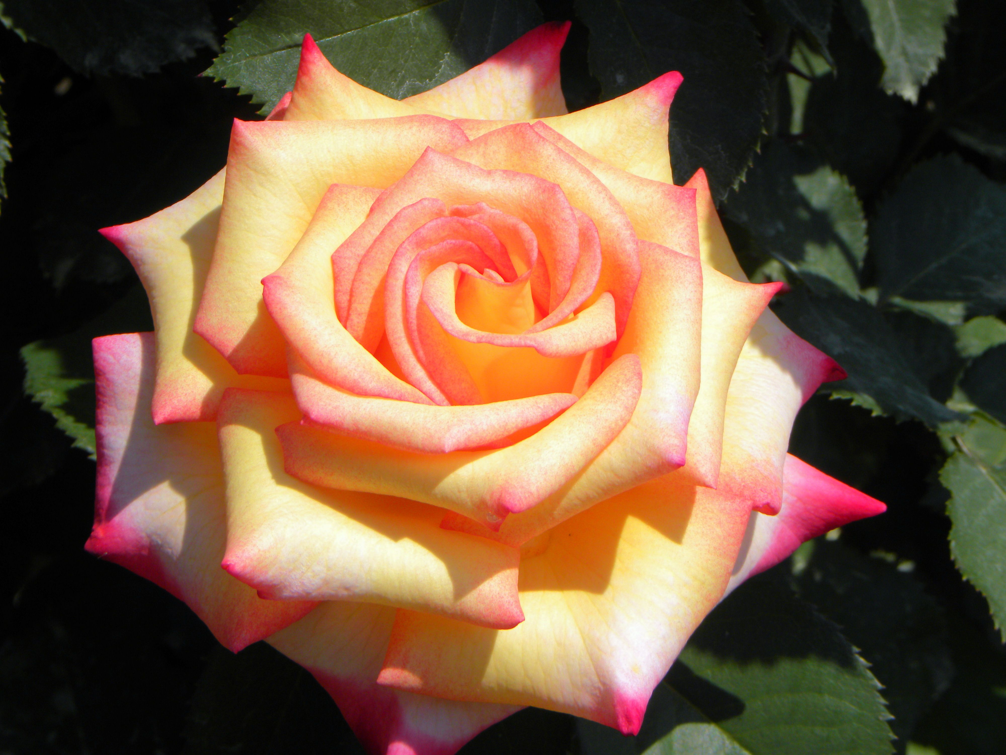 Beauty Edisto Memorial Gardens Orangeburg Sc By Crystal Chapman Memorial Garden Memories Rose
