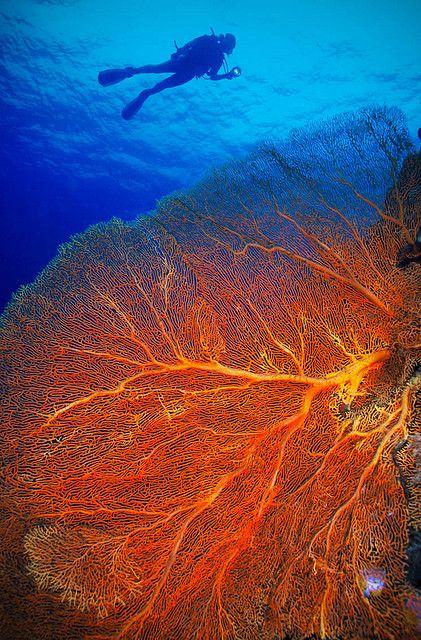 Oceano Pacífico, coral reef. Palau