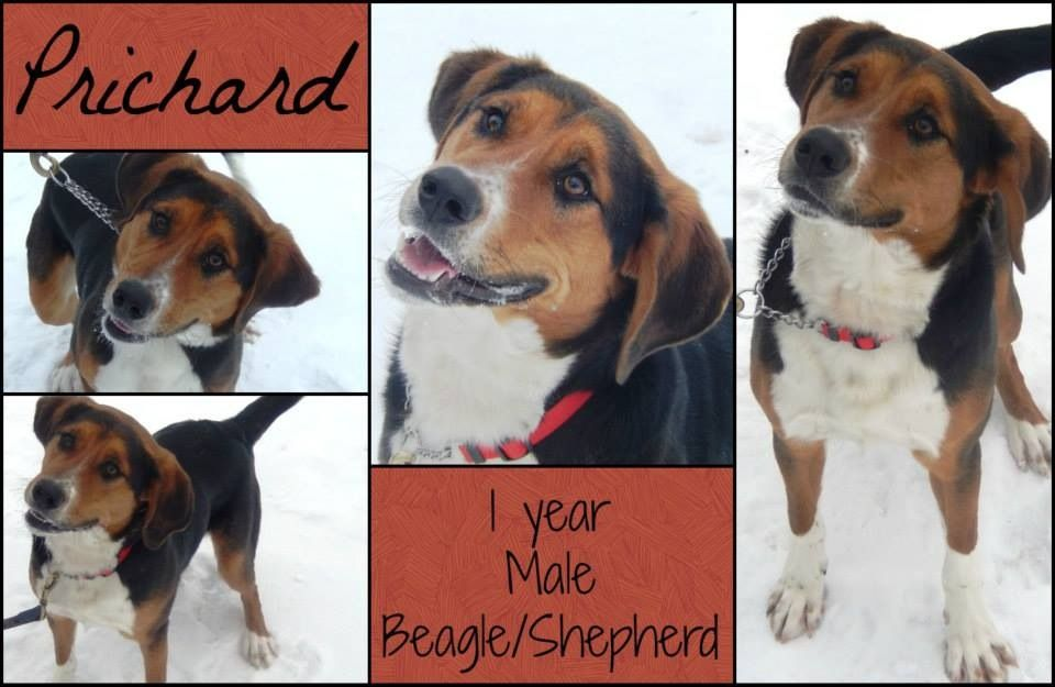 Founddogs Available For Adoption Or Strays Midland Mi Humane
