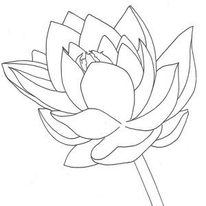 Lotus flower growing coloring page kids play color telescopes lotus flower growing coloring page kids play color mightylinksfo