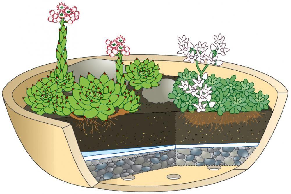 die unverwüstliche hauswurz wächst dort, wo es kaum eine andere, Gartenarbeit