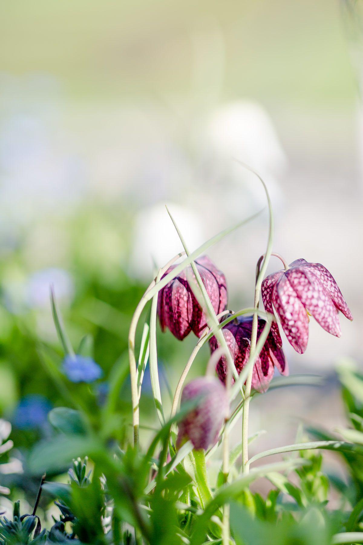Gartenzauber Im April Oder Was Tun Bei Giersch Pomponetti Garten Garten Pflanzen Relaxliege Garten