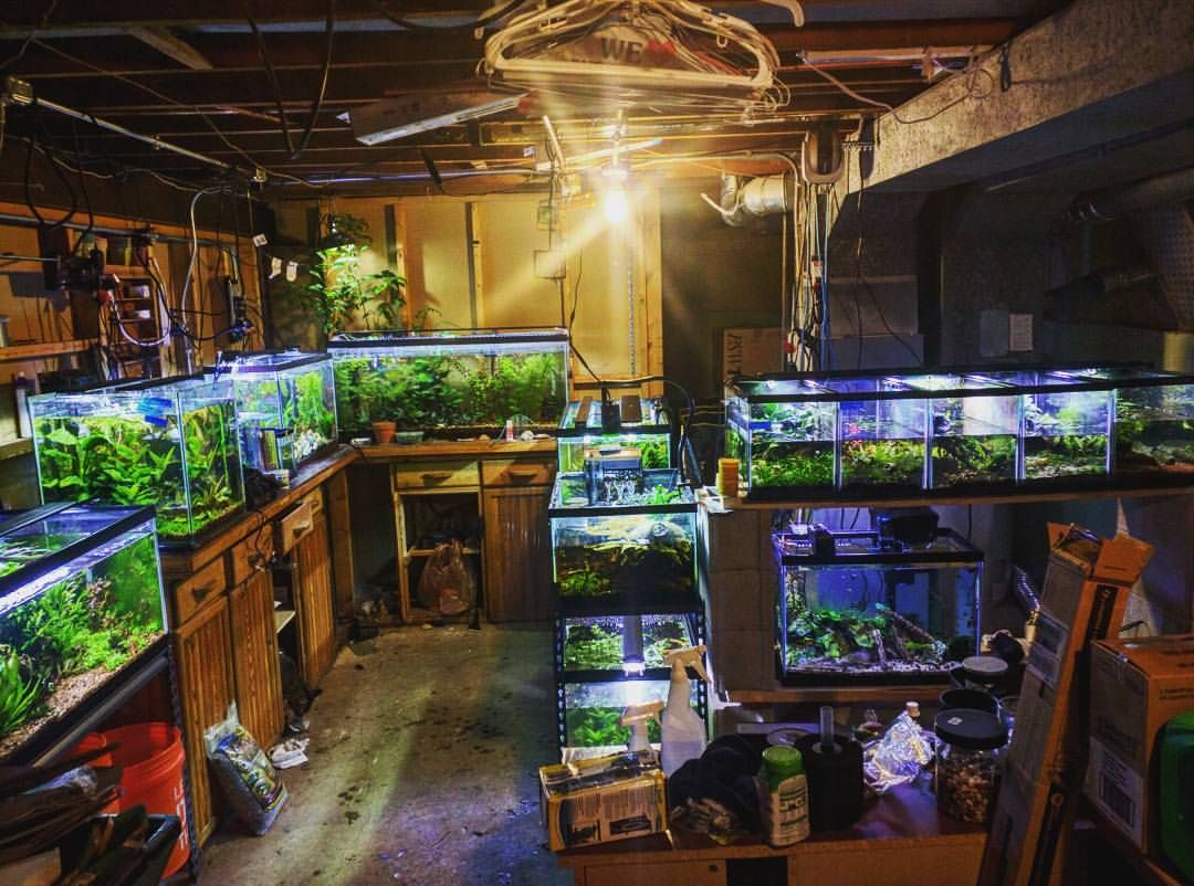 My Favorite Place Contemplating Big Changes But It S So Calming To Watch The Fish Go About Their Business Planteda Live Aquarium Fish Fishing Room Fish Tank