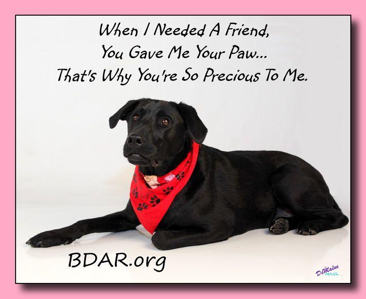 15+ Black dog animal rescue ideas