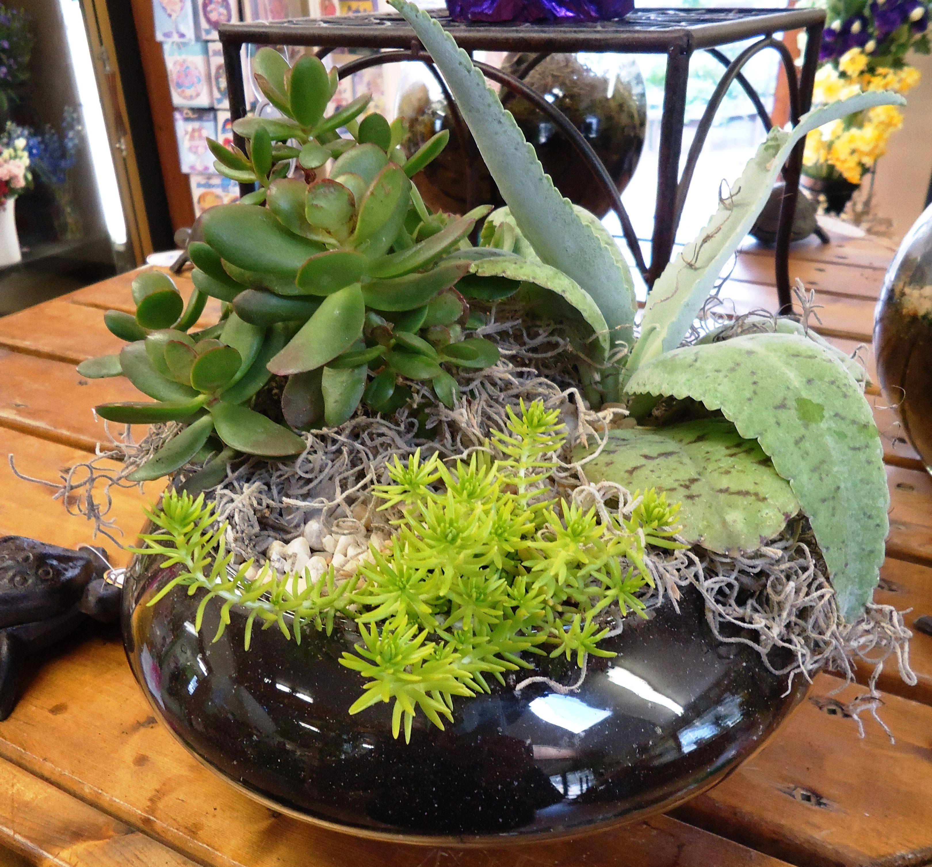 Open Terrarium With Succulents