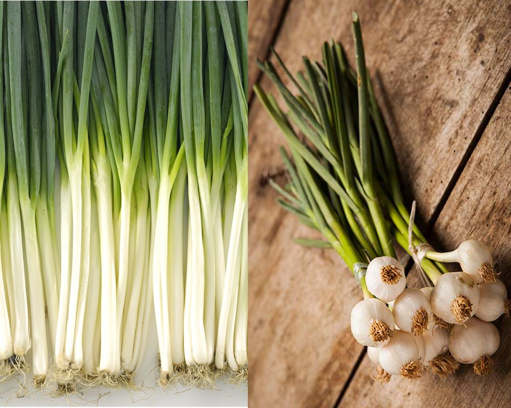Now Talking About The Difference In Flavors Of Scallions And Green Onions Is That Spring Onion Is More Intense In Flavor As Compar Spring Onion Scallion Onion