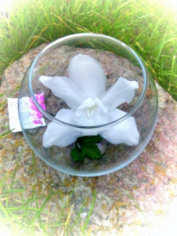 Fleur Stabilisee Ne Fane Pas Aucun Arrosage Aucun Entretien Www