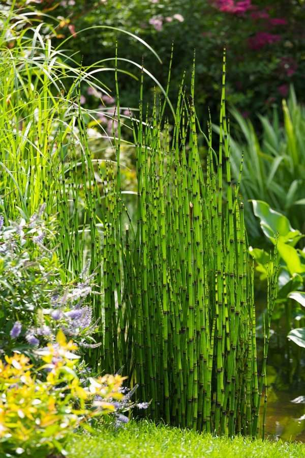 Gartenlandschaft Ideen Gartenteich Schachtelhalm Schilf Dekoration