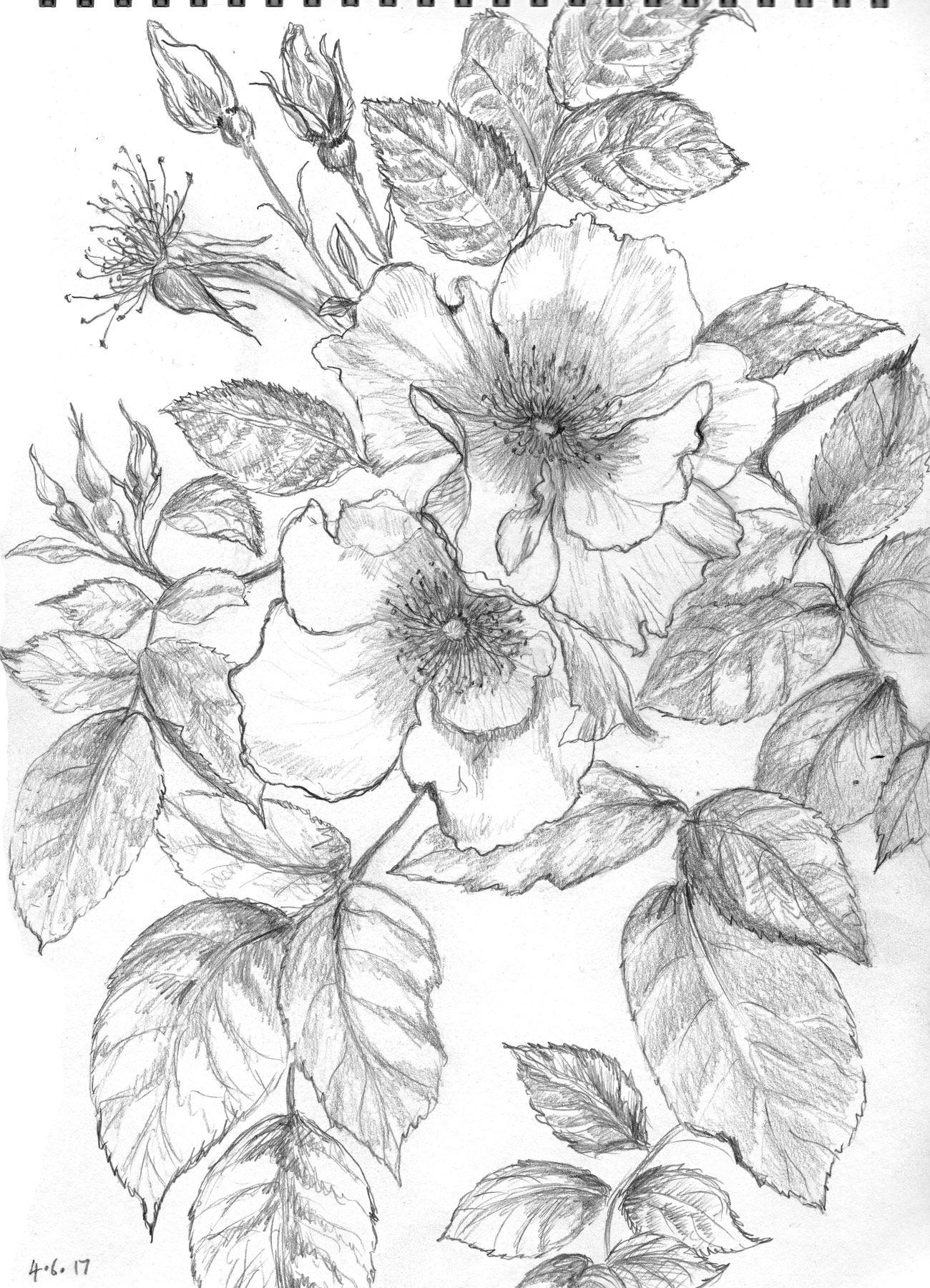 Oversize Wild Rose Stencil | Rose stencil, Large wall art, Hanging art