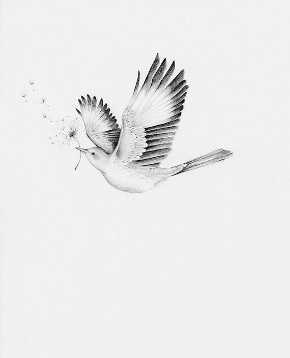Bird Drawing Giclee Fine Art Bird Wall Art Bird Print Modern Minimalist Bird Print And White Bird Print Bird Wall Art Dove Blessing Home Art Bird Drawings Bird Pencil Drawing Bird