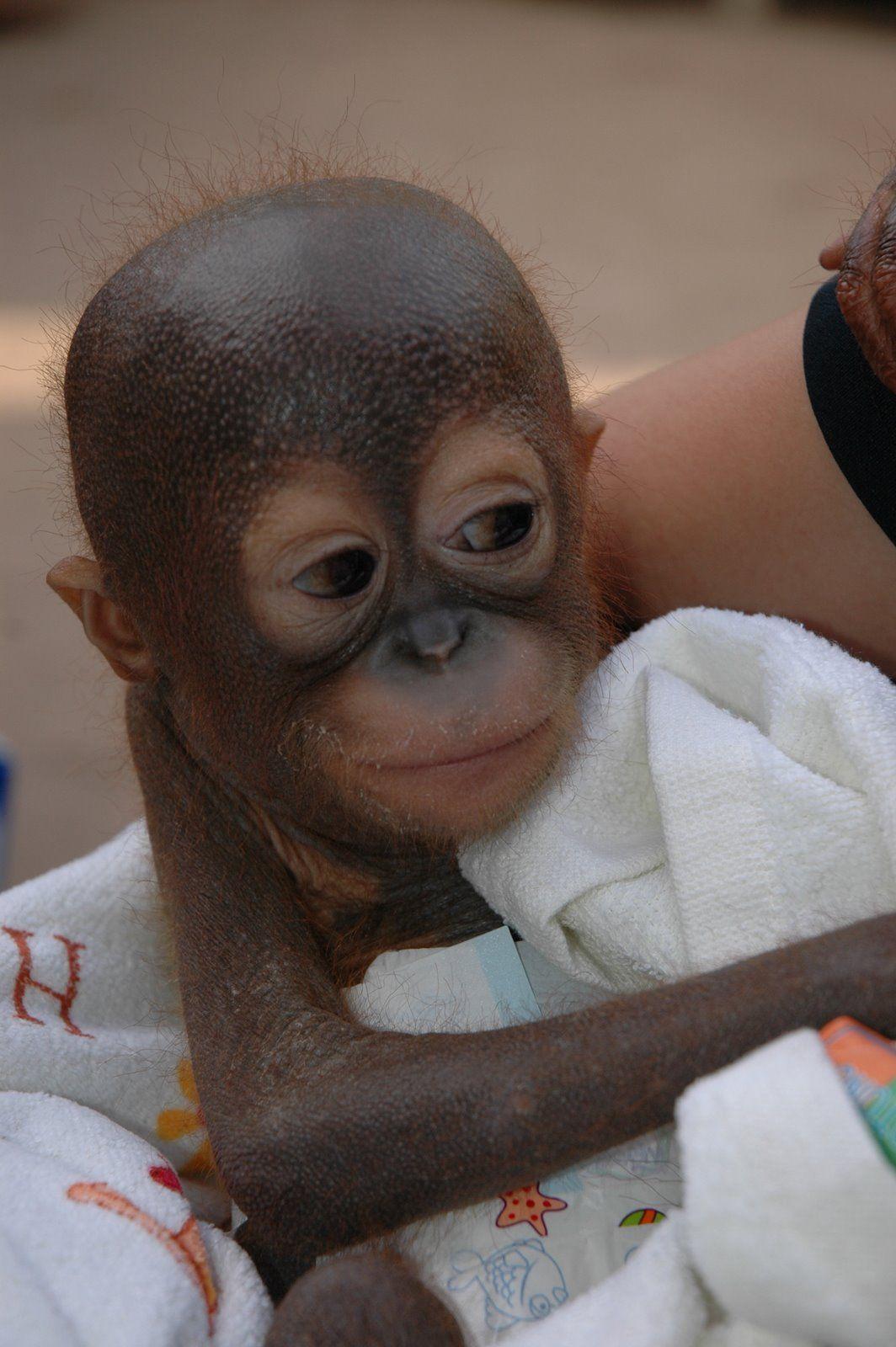 Another baby finds sanctuary at Nyaru Menteng
