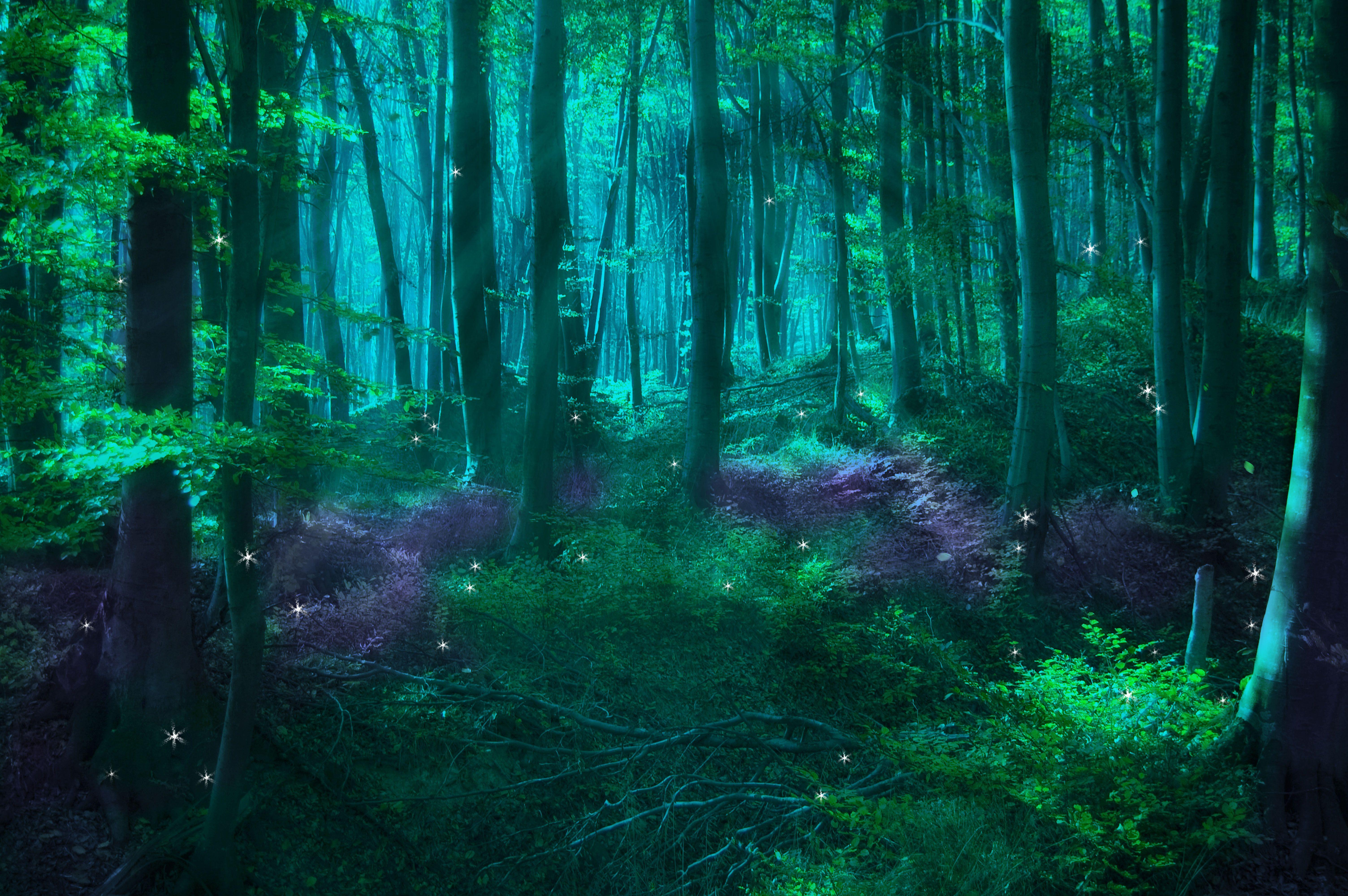 Волшебные лес картинки
