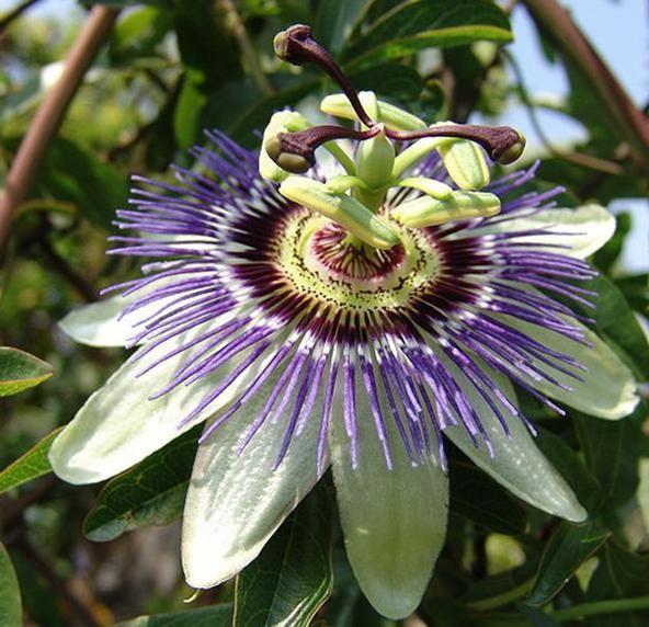 Pin on Rare beautiful flowers
