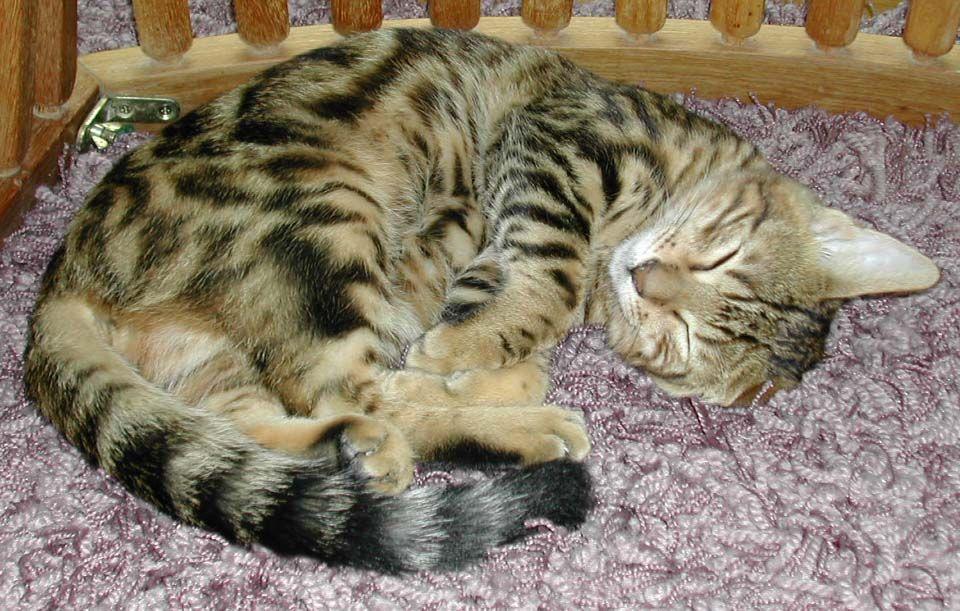 Cute 56 Cute Napping Cats Photos Check more at http://dougleschan.com/the-recruitment-guru/cats/56-cute-napping-cats-photos/