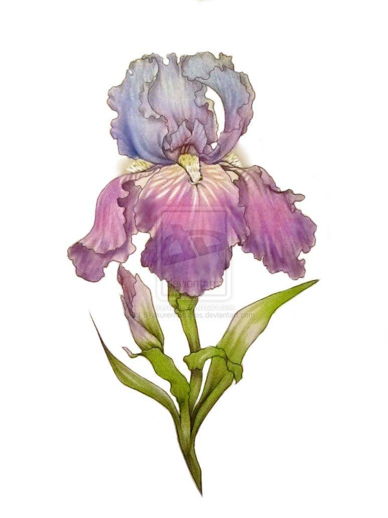ba5f07ad3f7fe Iris design by Byakuren-Studios on deviantART | Ink: KiddieCollage ...