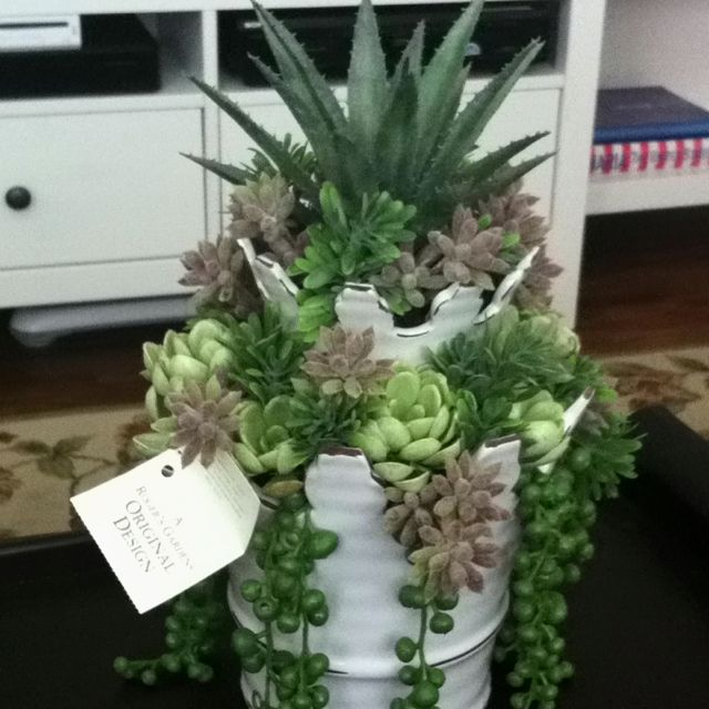 Roger S Gardens: Succulent From Roger's Gardens...one Of My Favorite Places