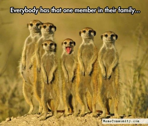 Image result for animal memes funny Animals beautiful