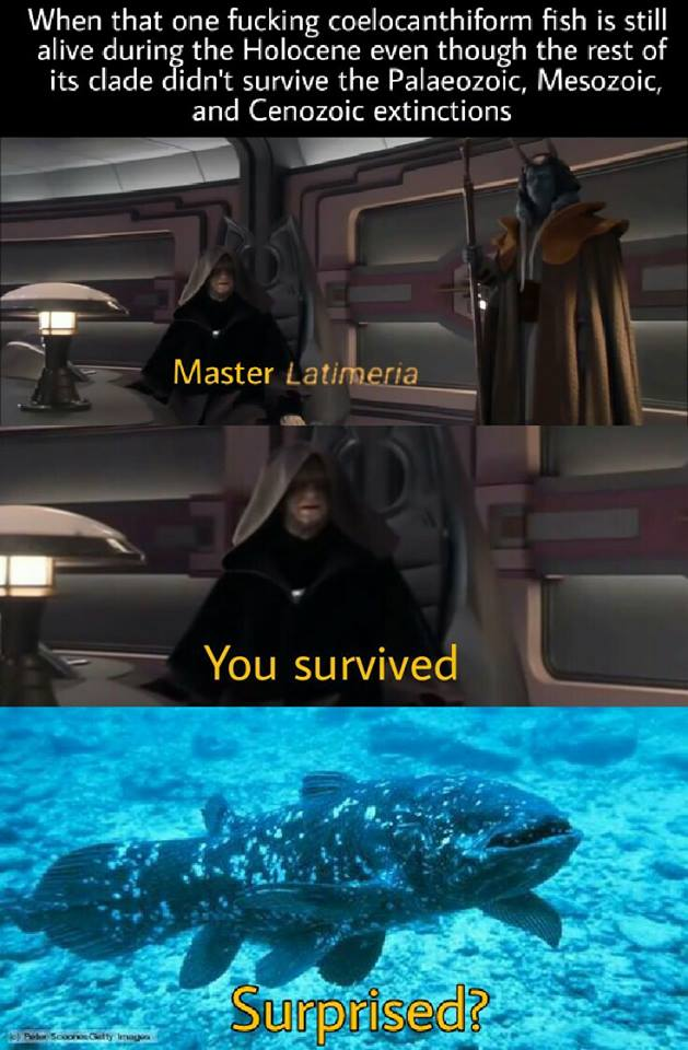 Revenge Of The Sith Memes