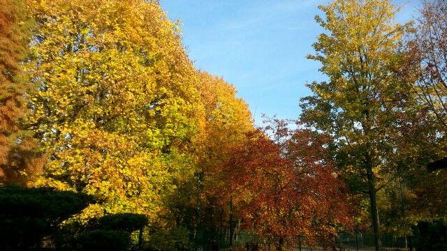 Herbst 015