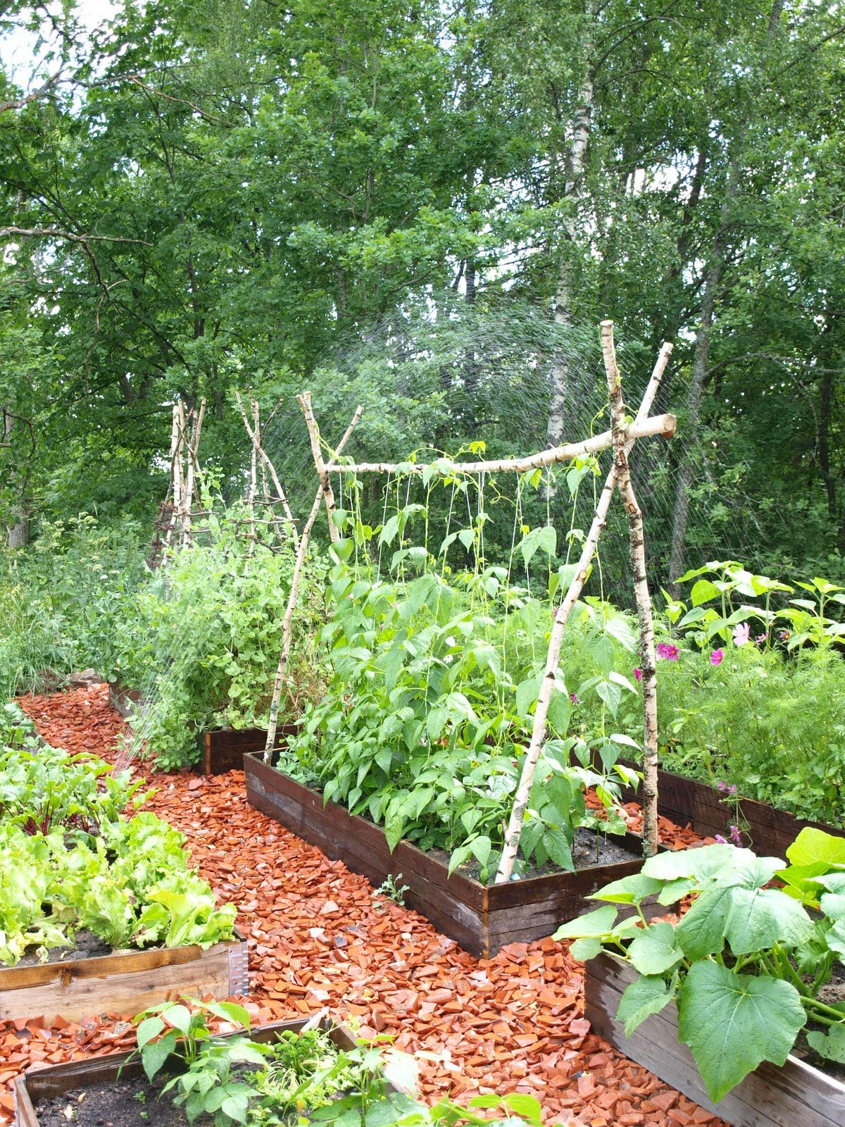 Climbing bean frame - done this with bamboo but it wasn\'t strong ...